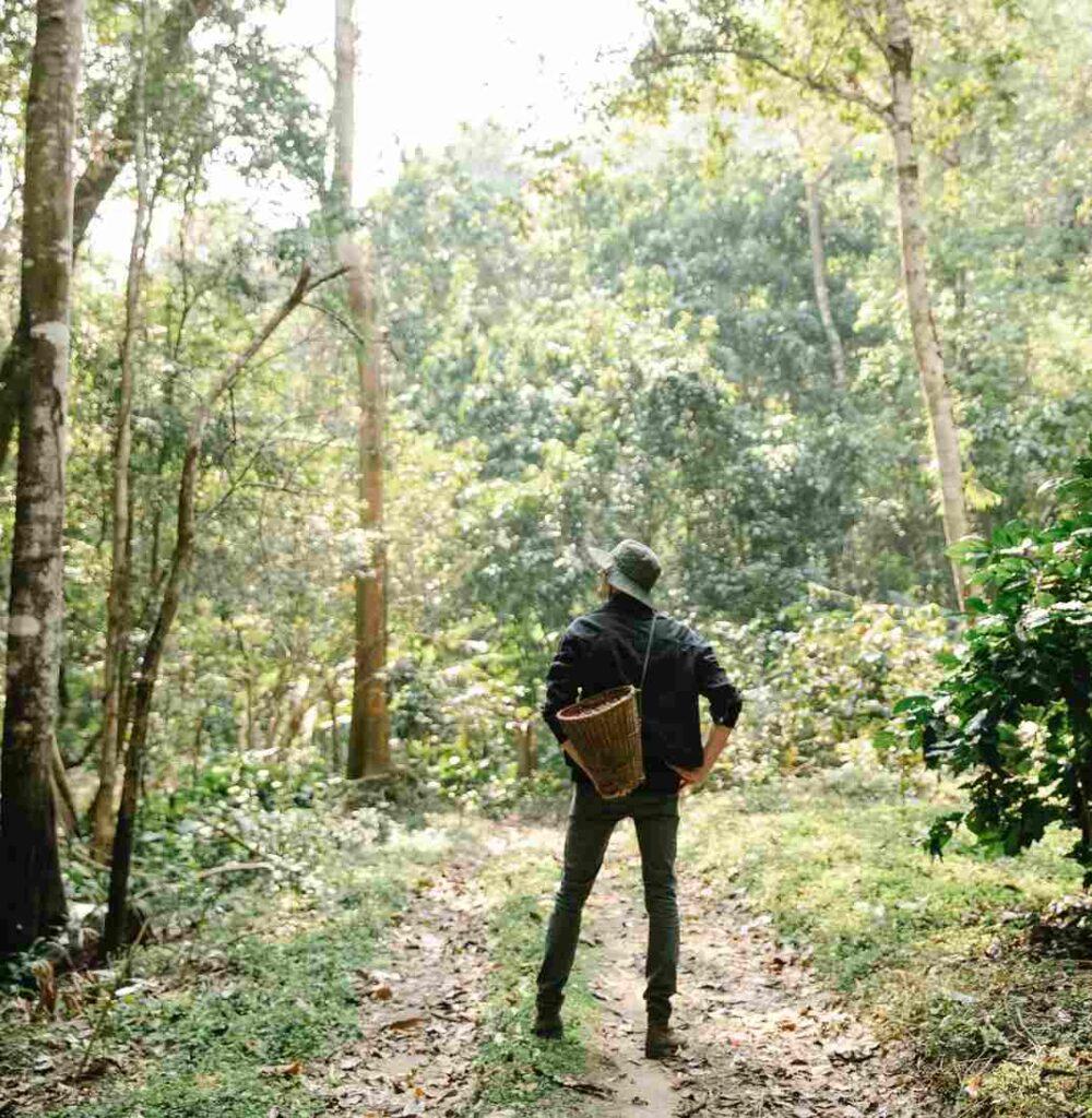 Perona en el bosque